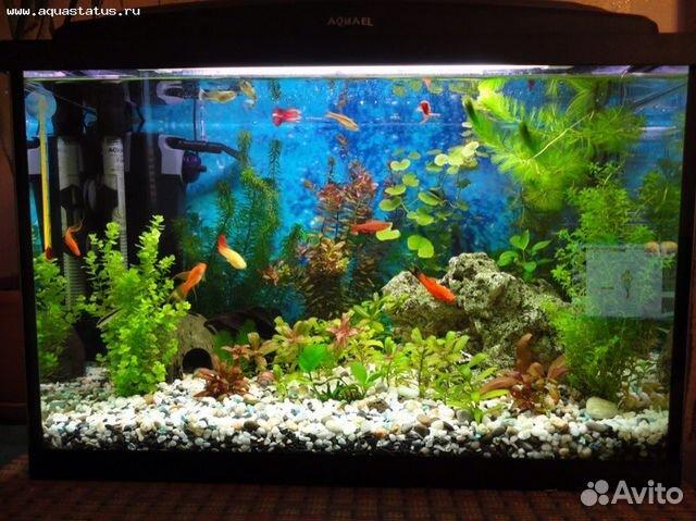 Оформление аквариума 100 литров фото