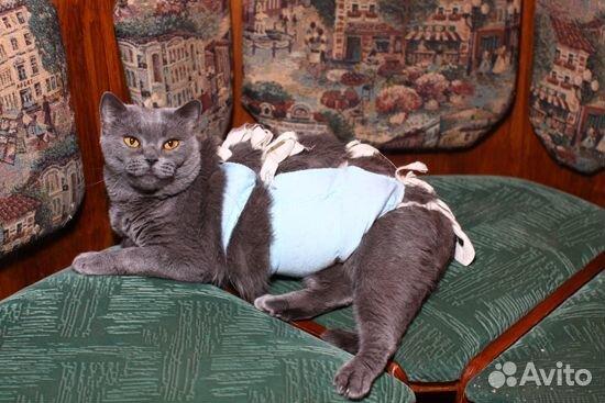 Почему кошка бьет кота после вязки