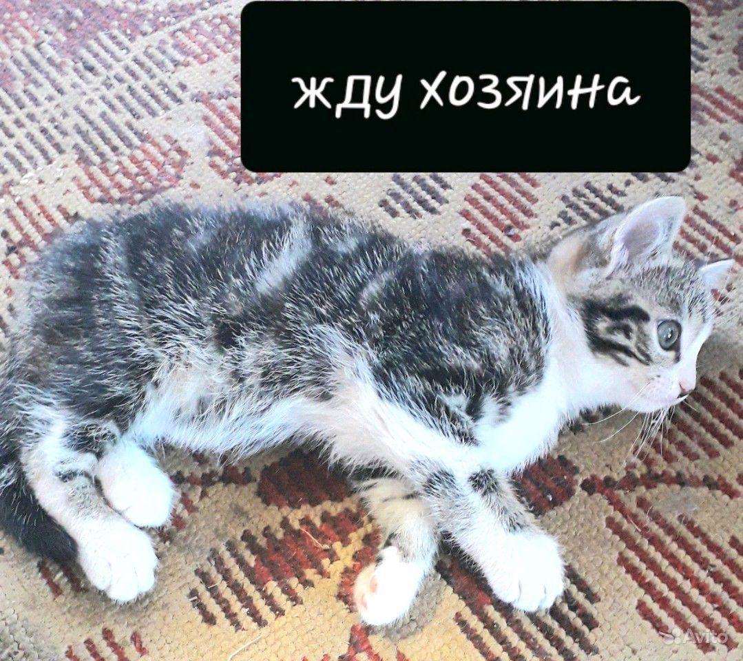 Отдам в добрые руки в Горно-Алтайске - фотография № 1