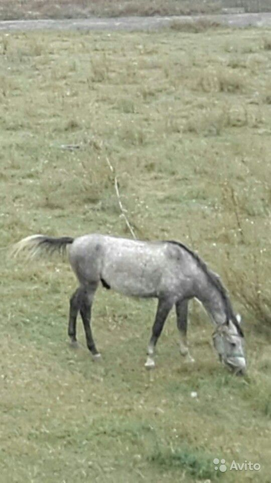 Пропала лошадь