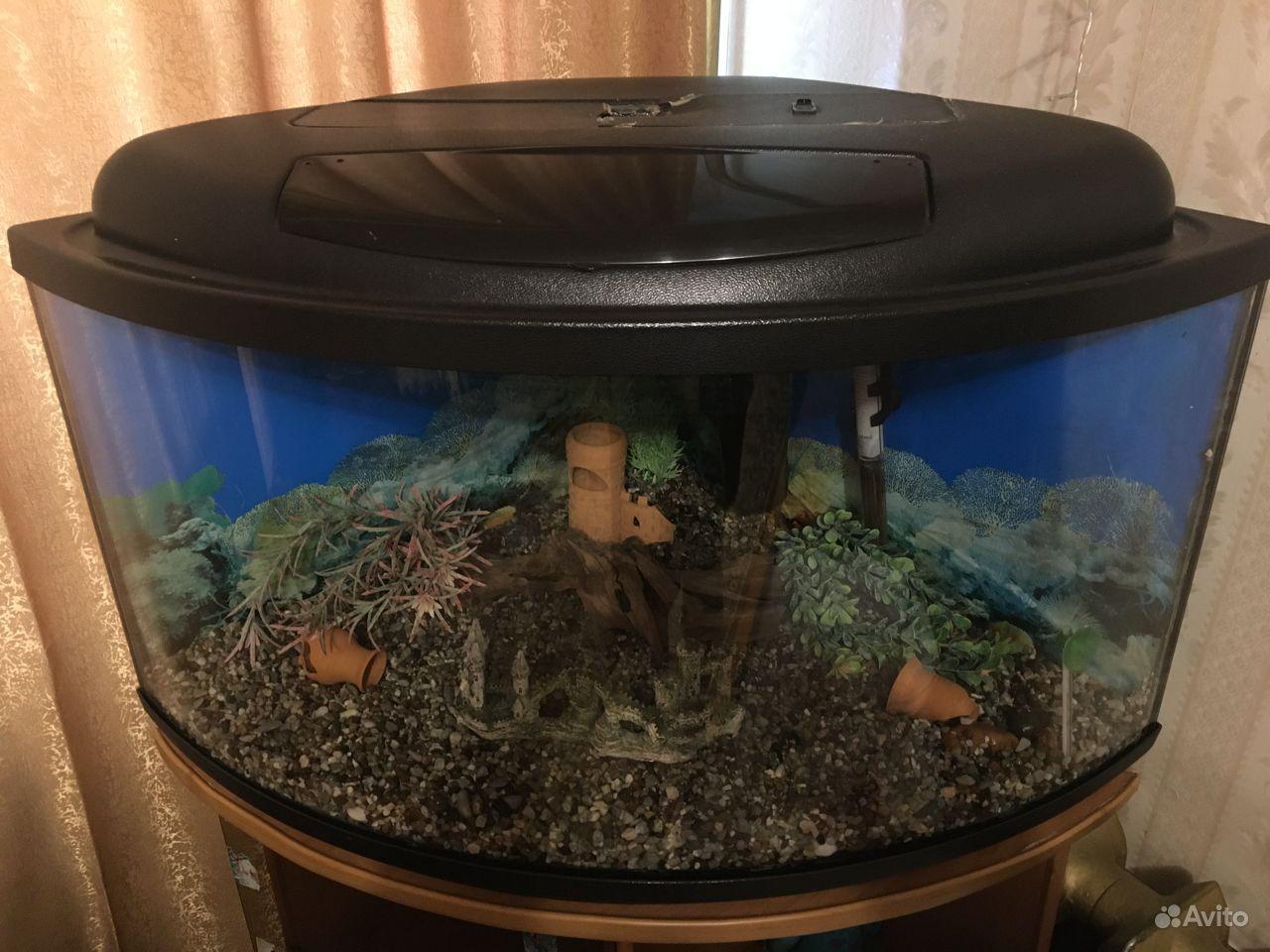 Аквариум угловой панорамный на 75 литров купить на Зозу.ру - фотография № 2