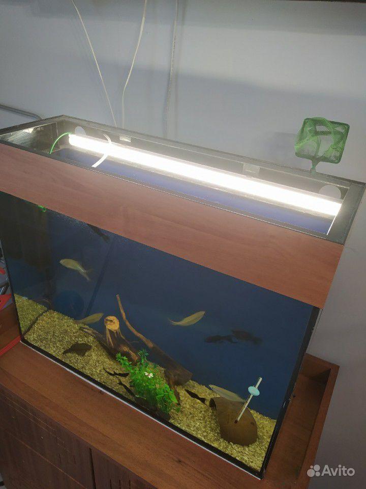 Аквариум 80л + рыбки купить на Зозу.ру - фотография № 2