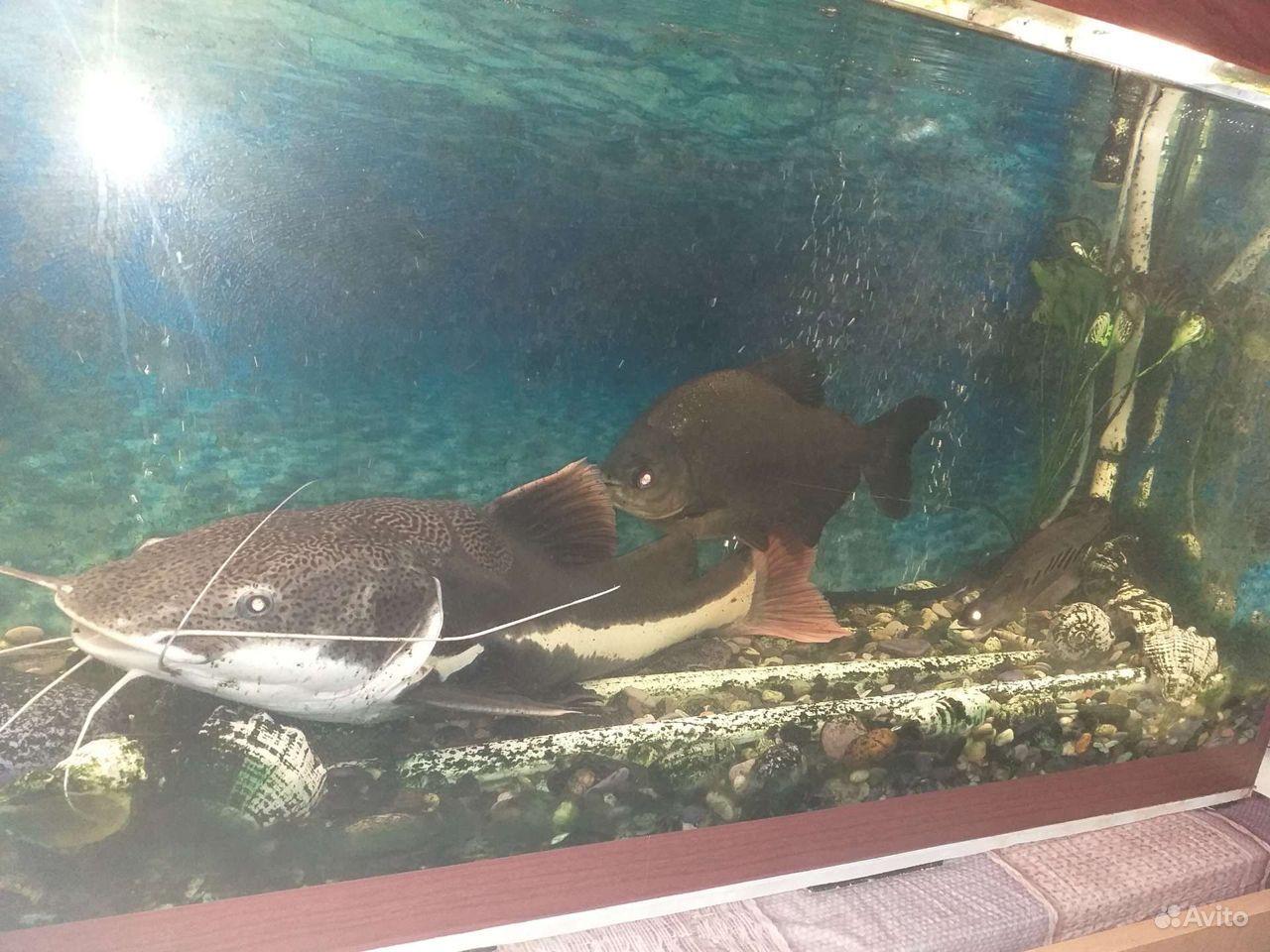Аквариум с рыбками купить на Зозу.ру - фотография № 5