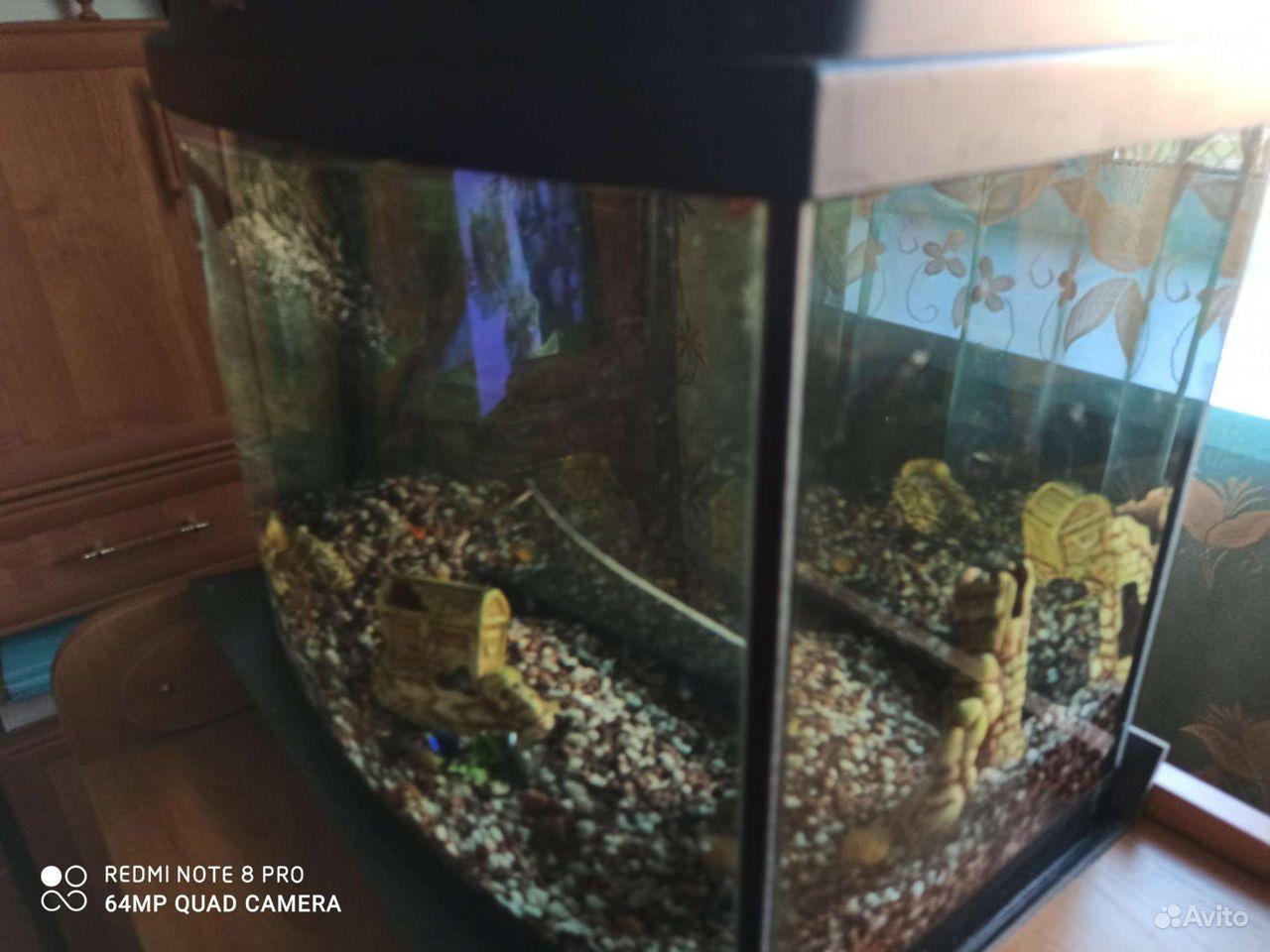 Аквариум, рыбки гуппи купить на Зозу.ру - фотография № 3