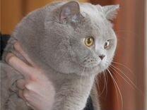 Авито продажа шотландских котят великий новгород свежие вакансии планирование и регулирование рыночных цен на продукцию работы и услуги