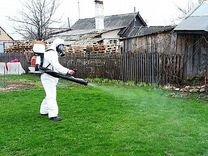 Уничтожение насекомых - в квартире и за городом — Предложение услуг в Москве