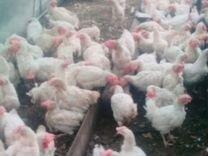 курицы белово фото предлагаем