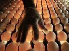 Инкубация птицы-2020, для вашего хозяйства