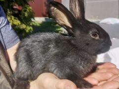Маленькие крольчата - чёрные