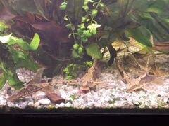 Украшение для аквариума