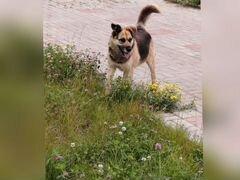 Собака-Анюта