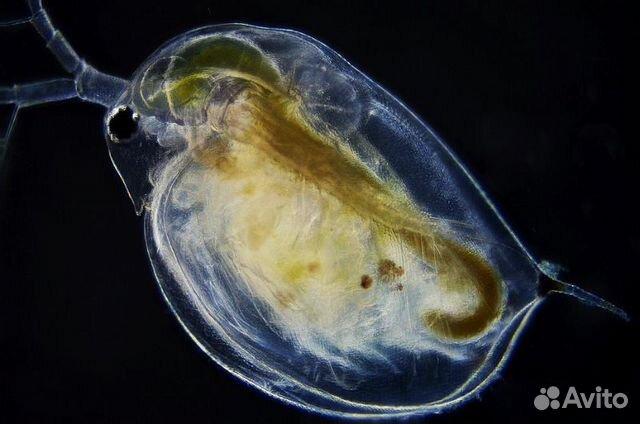 zhestkiy-sperma