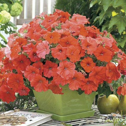 Купить профессиональные семена цветов