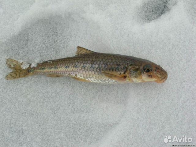 охота и рыбалка на лиманах краснодарский край