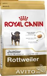 Royal Canin Rottweiler Junior— фотография №1