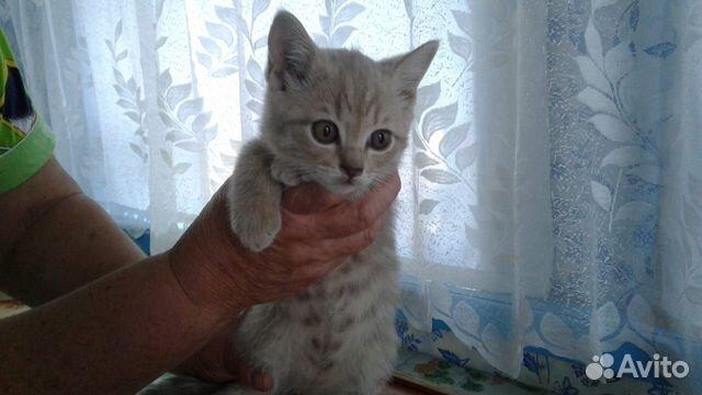 Отдам котенка 89230078502 купить 1