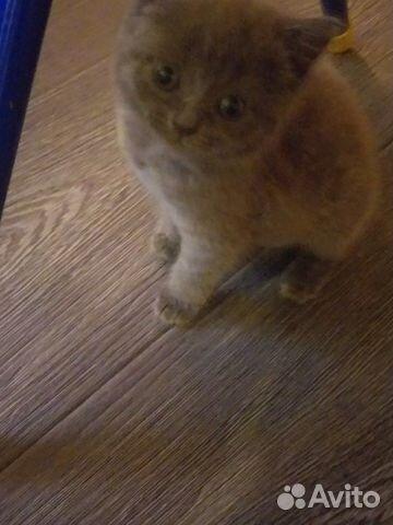 Котёнок 1.5 месяца