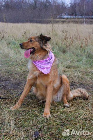 Собака в дар для семьи купить на Зозу.ру - фотография № 2