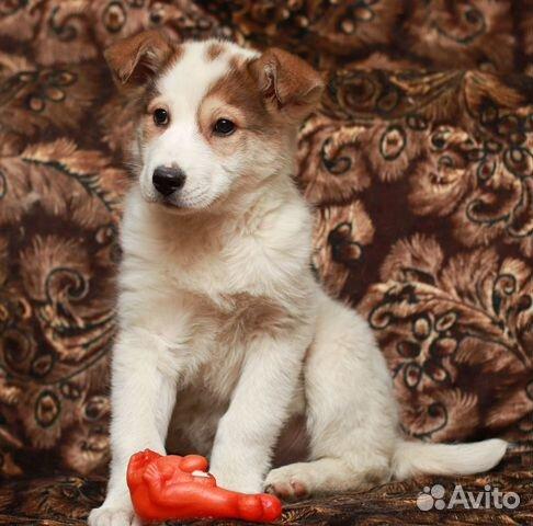 Белый медвежонок Беня в дар купить на Зозу.ру - фотография № 3