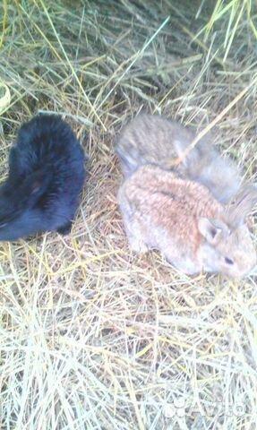 Продам месячных крольчат 89082951331 купить 3