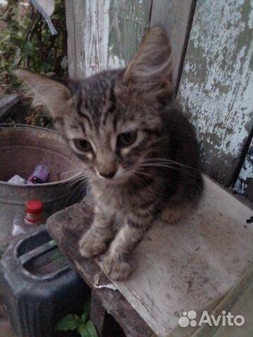 Котенок девочка  89397109841 купить 9