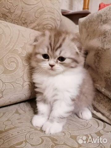 Очаровательные котята  89132492220 купить 5
