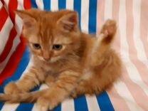 Котенок в добрые руки отдам