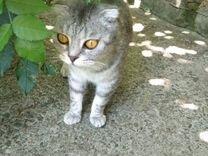 Красивые и умные котята