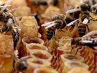 Замороженное пчелиное маточное молочко 2020 г