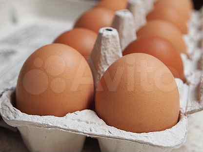 Яйца куриные свойские