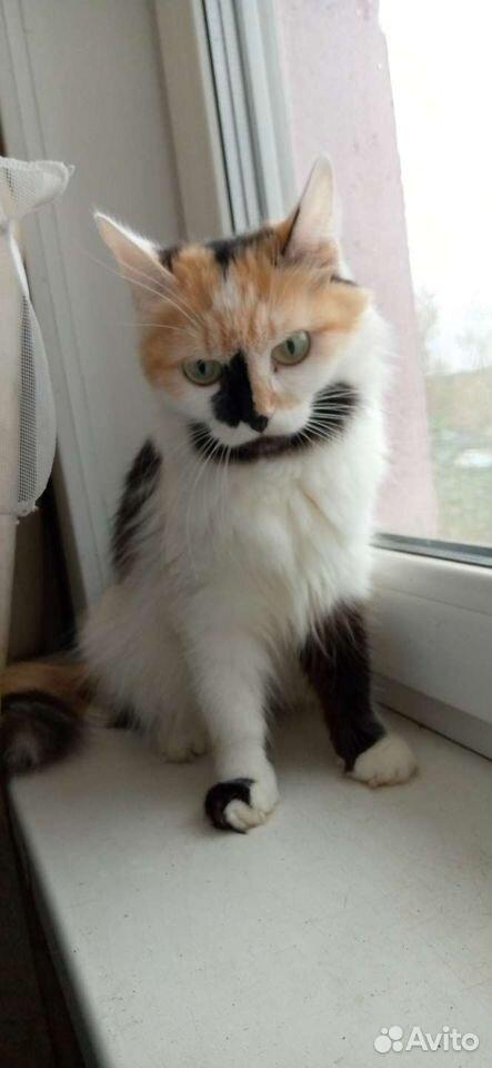 Кошка  89059831610 купить 5