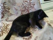 Найден котенок — Кошки в Геленджике