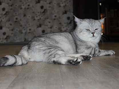 Смотреть фото различных пород кошек с фотографиями и подписями | 312x416
