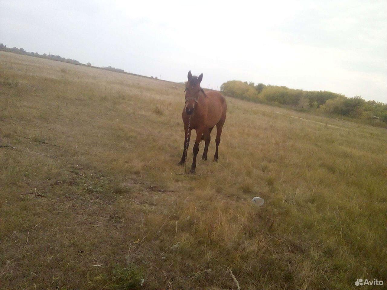 Лошадь жеребушка  89502100369 купить 4