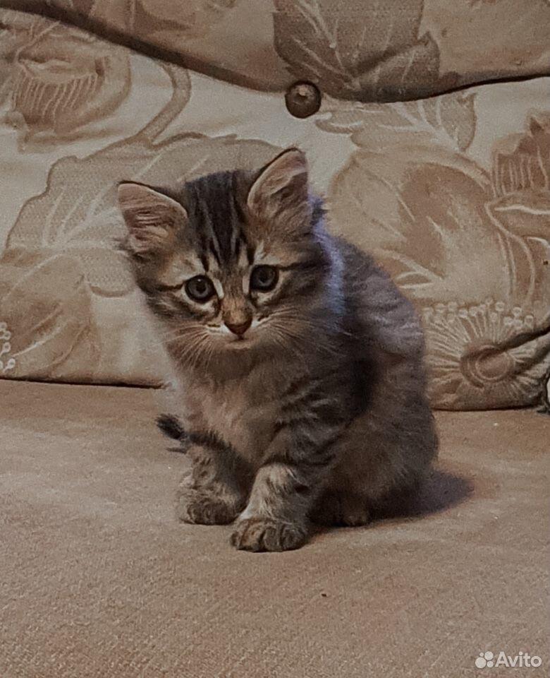 Кошка  89101089693 купить 2