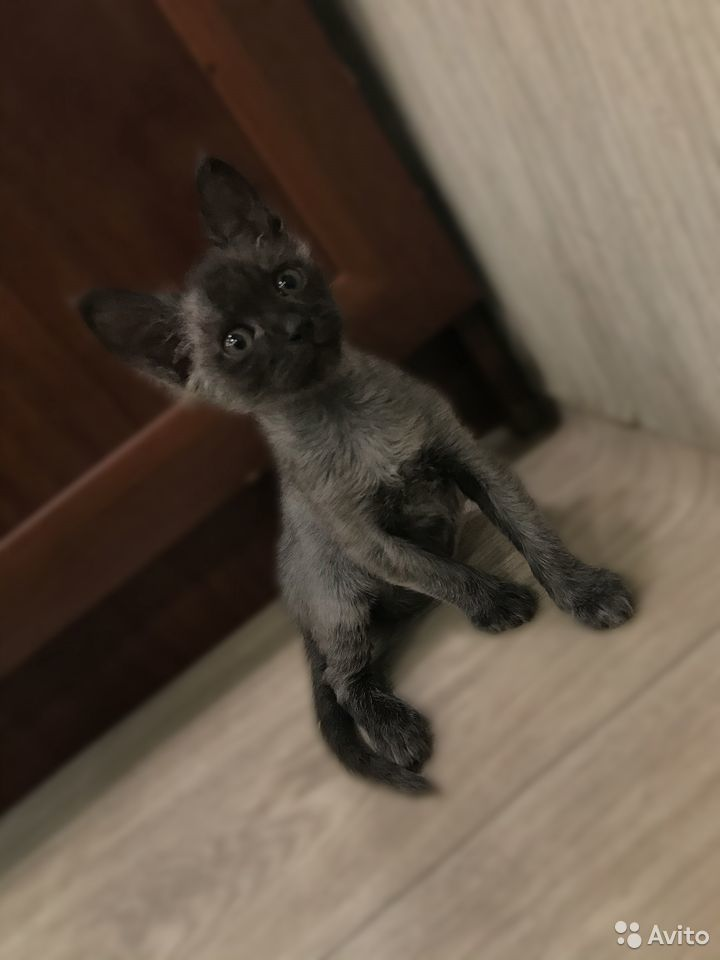 Verkaufe Kätzchen  89621612953 kaufen 1