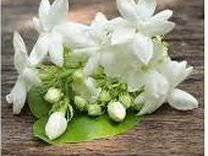 Сушёные цветки чубушника (жасмина) - афродизиак