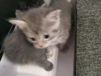 Котята, подкинули в коробке, отдадим в хорошие рук